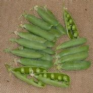 Pea Avola - 300 seeds - Vegetables